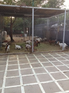 Animal Cages at Fayfa Garden Centre, Tahlia Street, Jeddah, Saudi Arabia.