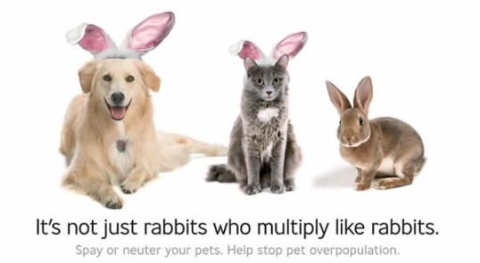 It's not just rabbits who multiply like rabbits.