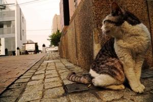 lost cat 3