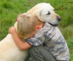 lost dog 8