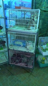 pet shop in jeddah